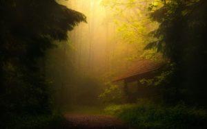 Fog Trees Forest Thicket Desktop Background