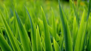 Grass Greens Plant Desktop Background