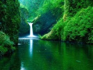 Green Forest Waterfall Desktop Background