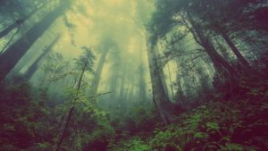 Nature Trees Mystic Atmosperic Fog
