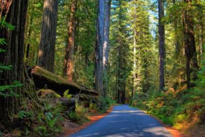 Road through Redwood Forest 8K Desktop Background