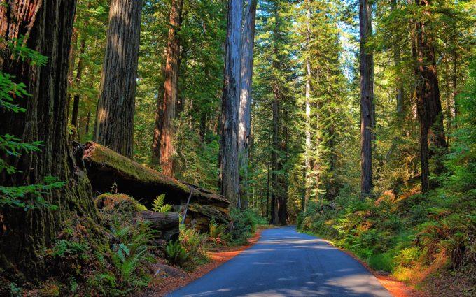 Road through Redwood Forest 8K Desktop Background
