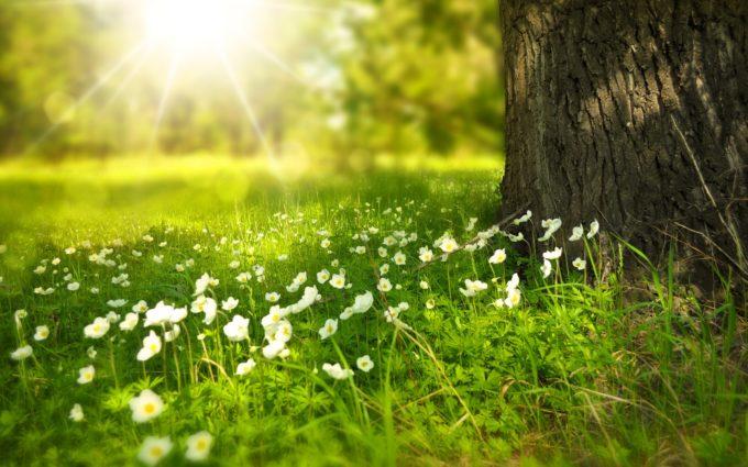 Spring Tree Flowers Meadow