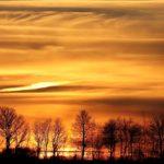 Nature Trees Mystic Atmosperic Fog