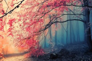 Tree Fog Nature Beautiful Desktop Background