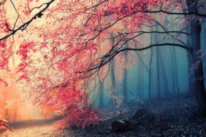 Tree Fog Nature Beautiful Desktop Background