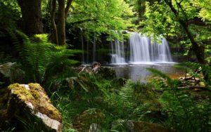 Waterfall Grass Nature Shadow Desktop Background