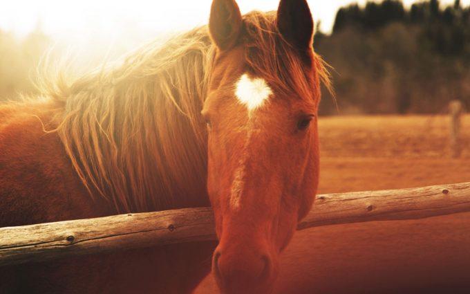 Horse Face Light Mane Desktop Wallpapers