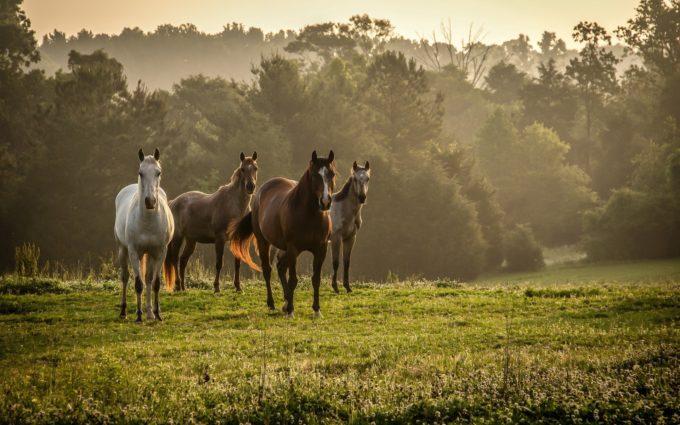 Horses Grass Herd Walk Trees Fog Desktop Wallpapers