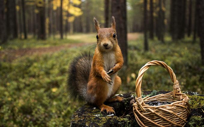Squirrel Grass Shopping Summer Greens Desktop Wallpapers