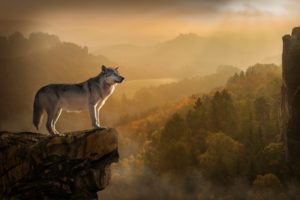 Wolf Rock Precipice Predator Desktop Wallpapers