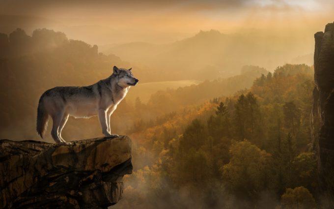 Wolf Rock Precipice Predator Desktop Wallpapers
