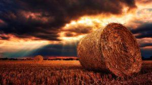 Harvest Desktop Wallpaper