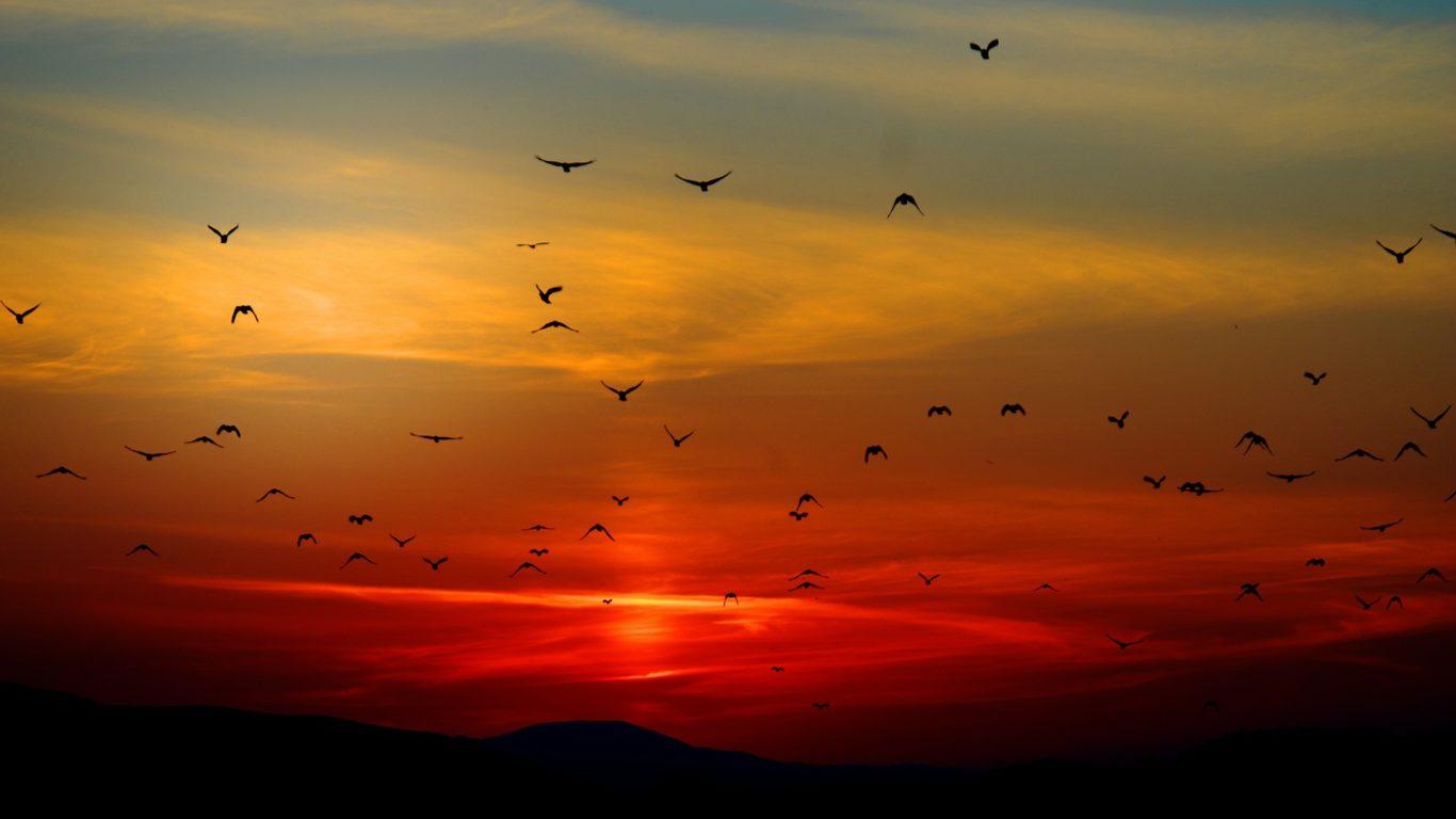 Sunset With Birds Desktop Wallpaper  Computer Background Images