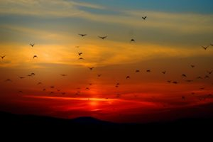 Sunset With Birds Desktop Wallpaper