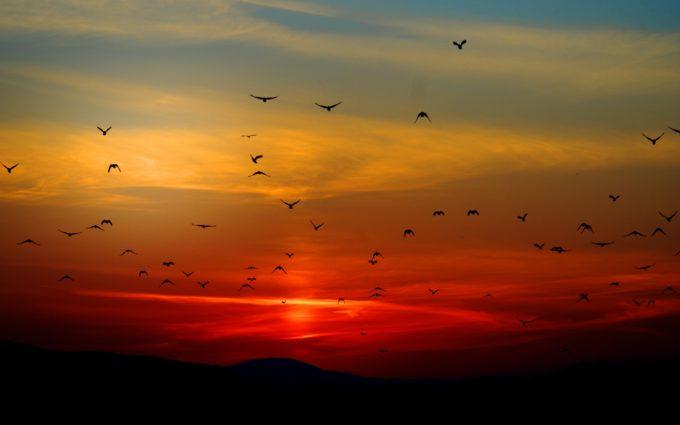 Sunset With Birds Desktop Wallpaper