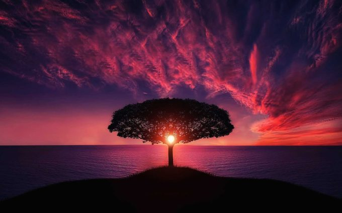 Tree Sunset Desktop Wallpaper