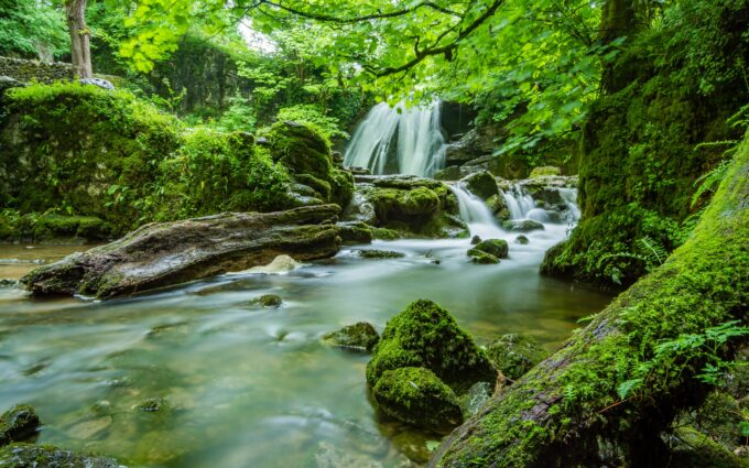 Waterfalls in Forest Background Wallpaper