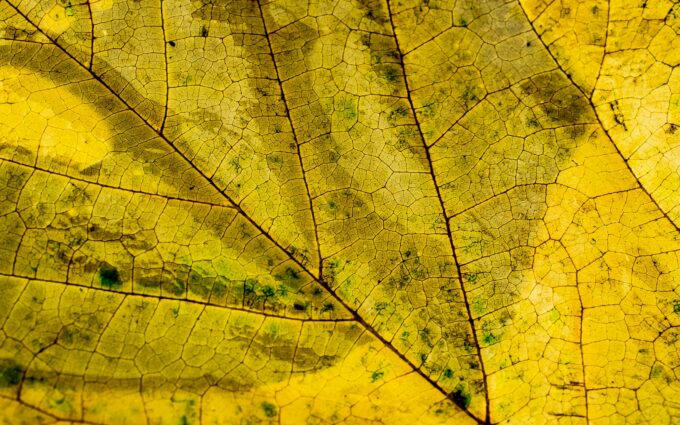 Abstract Autumn Bright Close Up Desktop Wallpapers