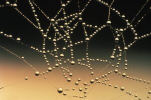 Abstract Close Up Cobweb Connection Desktop Wallpapers