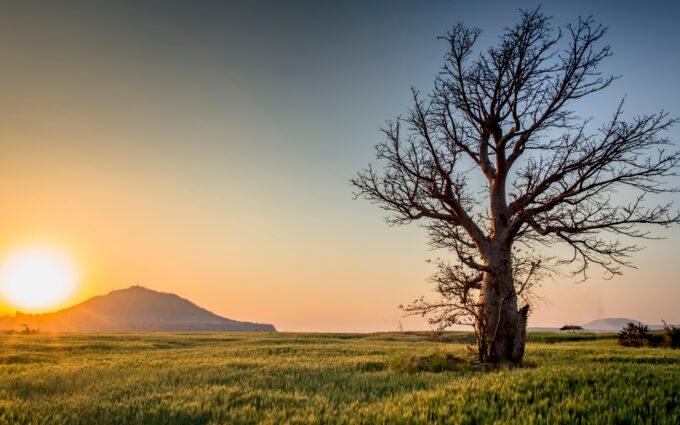 Backlit Countryside Dawn Daylight Desktop Wallpapers