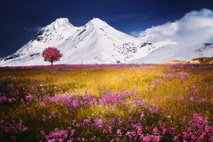 Bloom Blossom Field Flora Desktop Wallpapers