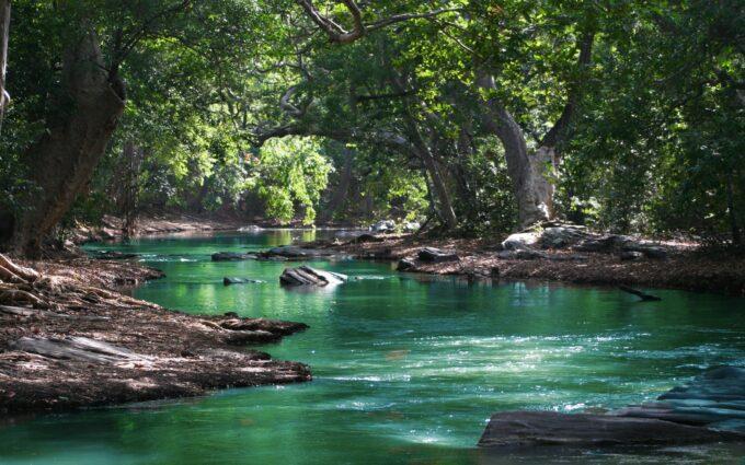 Body Of Water Between Green Leaf Trees Desktop Wallpapers