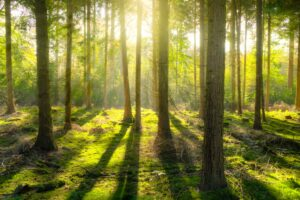 Bright Daylight Environment Forest Desktop Wallpapers