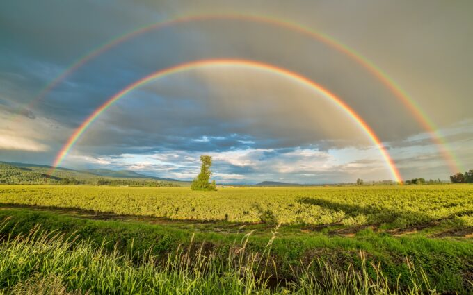 Crop Field Under Rainbow And Cloudy Skies At Dayime Desktop Wallpapers