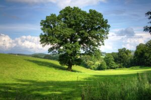 Green Tree On Grass Field During Daytime Desktop Wallpapers