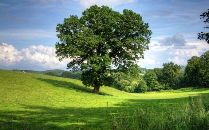 Green Tree On Grass Field During Daytime Desktop Wallpapers