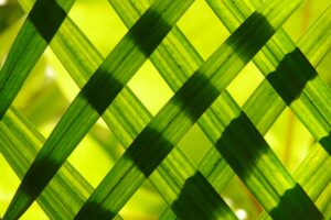 Green Woven Frame Desktop Wallpapers