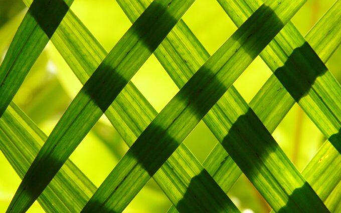 Green Woven Frame Desktop Wallpapers