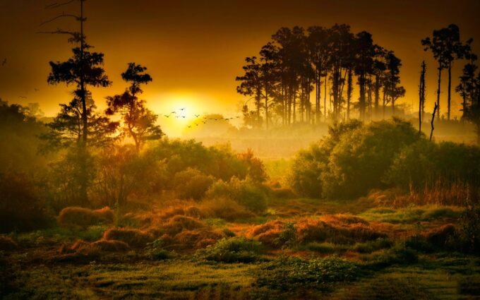 Landscape Photo Of Forest Desktop Wallpapers
