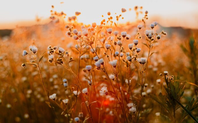Flowers During Daytime Desktop Wallpapers
