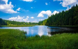 Scenic View of Lake in Forest Desktop Wallpapers