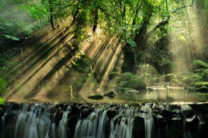 Scenic View of Rainforest Desktop Wallpapers